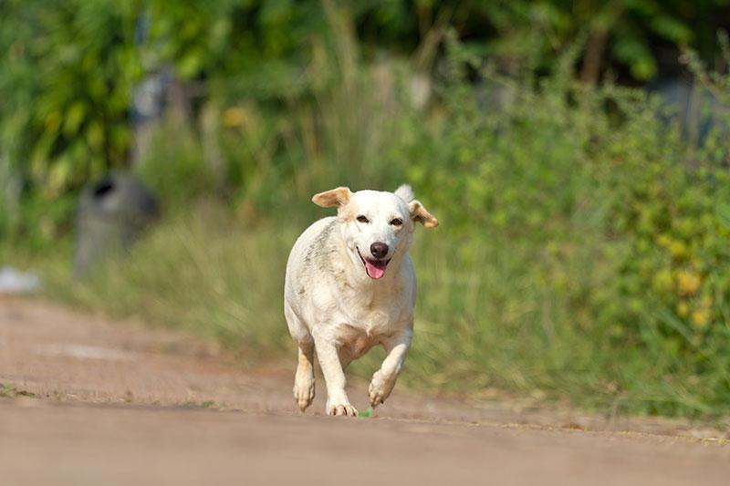 dog23 - Companion Animal Hospital, Albany, GA   Companion Animal
